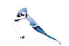 Jay blu in su soffiato Fotografia Stock