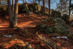 Jay Cooke State Park is op het St Louis River zuiden van Duluth i royalty-vrije stock foto