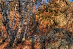 Jay Cooke State Park is op het St Louis River zuiden van Duluth i royalty-vrije stock fotografie