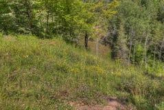 Jay Cooke State Park is op het St Louis River zuiden van Duluth in Minnesota royalty-vrije stock afbeelding