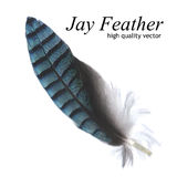 Jay Feather (Hoogte - kwaliteitsvector) Royalty-vrije Stock Foto