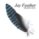 Jay Feather (vetor de alta qualidade) ilustração royalty free