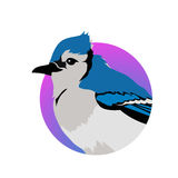 Jay Flat Design Vector Illustration bleu Photographie stock
