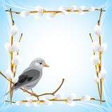 Jay in the frame with pussy willow branches Royalty Free Stock Image
