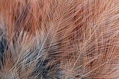jay plumage royaltyfri foto