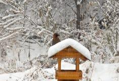 Jay sitzt auf der Zufuhr Winter kam Garrulus glandarius (eurasischer Eichelhäher) Lizenzfreies Stockfoto