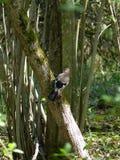 Jay su un albero fotografia stock libera da diritti