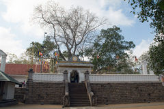 Jaya Sri Maha Bodhi Obrazy Royalty Free