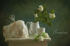 Jazmín Foto de archivo libre de regalías