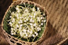 Jazmín en la cesta, flores del jazmín árabe para la guirnalda hecha a mano, material del jazmín para la guirnalda hecha a mano fotografía de archivo