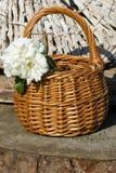 jazmín en una cesta Foto de archivo