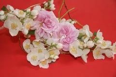 Jazmín y flores color de rosa Imágenes de archivo libres de regalías
