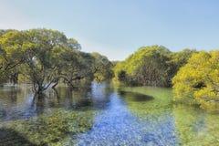 JBay Mangrovesscape