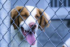 JD der Hund Lizenzfreies Stockbild