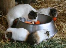 jeść króliki doświadczalne Zdjęcia Stock