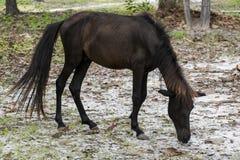 jeść trawy biały koń Obraz Stock