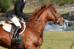 jeźdźcy końskiego show Fotografia Royalty Free