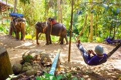Jeźdzów słonie na Phuket wyspie w Tajlandia zdjęcie royalty free