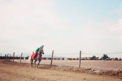 Jeźdza rozgrzewkowy up jego koń Zdjęcia Royalty Free