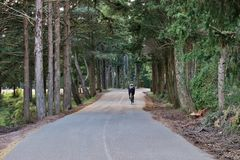 Jeździć na rowerze wzdłuż lasowej drogi na słonecznym dniu obrazy royalty free