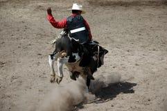 jeździec łydkowy Zdjęcie Royalty Free
