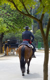 jeździec hiszpański Zdjęcie Royalty Free
