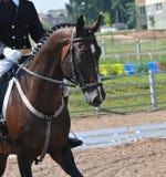 Jeździec i koń Zdjęcia Royalty Free