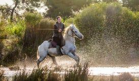 Jeździec na Białym Camargue koniu Fotografia Royalty Free