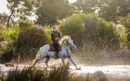 Jeździec na Białym Camargue koniu Zdjęcie Royalty Free