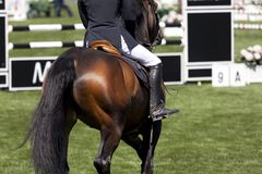 Jeździec na wysokiego skoku rywalizaci Zdjęcie Royalty Free