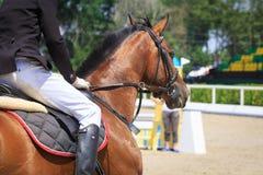 Jeździec siedzi na końskim czekaniu dla początku rywalizacja przeciw tłu trybuny Obraz Royalty Free