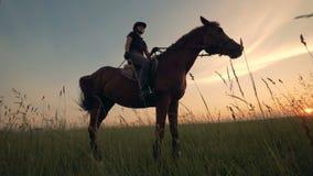 Jeździec z batem na końskim, dolnym widoku, zbiory