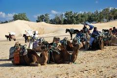 Jeździeccy wielbłądy w saharze Obrazy Stock