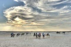 Jeździeccy wielbłądy w saharze Zdjęcia Royalty Free