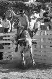 Jeździecka wysokość Zdjęcie Stock