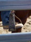 Jeździecki but i pocięgiel Fotografia Royalty Free