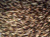 Jeżów kręgosłupy zdjęcia stock