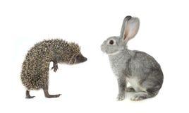 Jeż i szarość królik zdjęcie royalty free