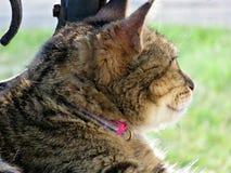 Jeżeli Aphrodite był koci Ładny kot w świetle słonecznym Obrazy Royalty Free