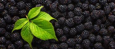 Jeżynowy karmowy tło Świeże jagody i zielony liść Zdjęcia Royalty Free