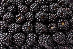 Jeżynowy owocowy tło obrazy stock