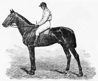 jeździec obrazy royalty free