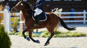 Jeździec na podpalanym koniu w rywalizacjach Obraz Royalty Free