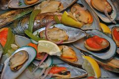 je mussels Zdjęcia Royalty Free