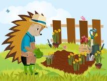 Jeż ogrodniczka obrazy royalty free