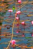 je pszczoła kwiatu i ptaka Zdjęcie Royalty Free