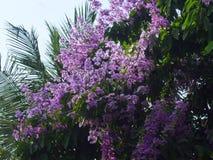 Je soumets une image de paysage de groupe de fleur violette Images stock