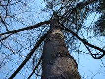 Je suis un arbre grand et grand images stock