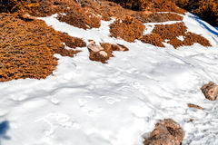 Je t'aime που γράφεται στο χιόνι Στοκ φωτογραφία με δικαίωμα ελεύθερης χρήσης