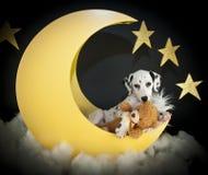 Je t'aime à la lune et au dos ! Image libre de droits